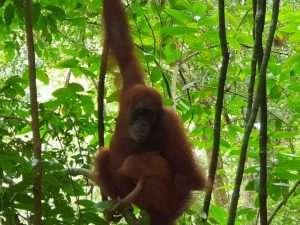 Retreats North Sumatra